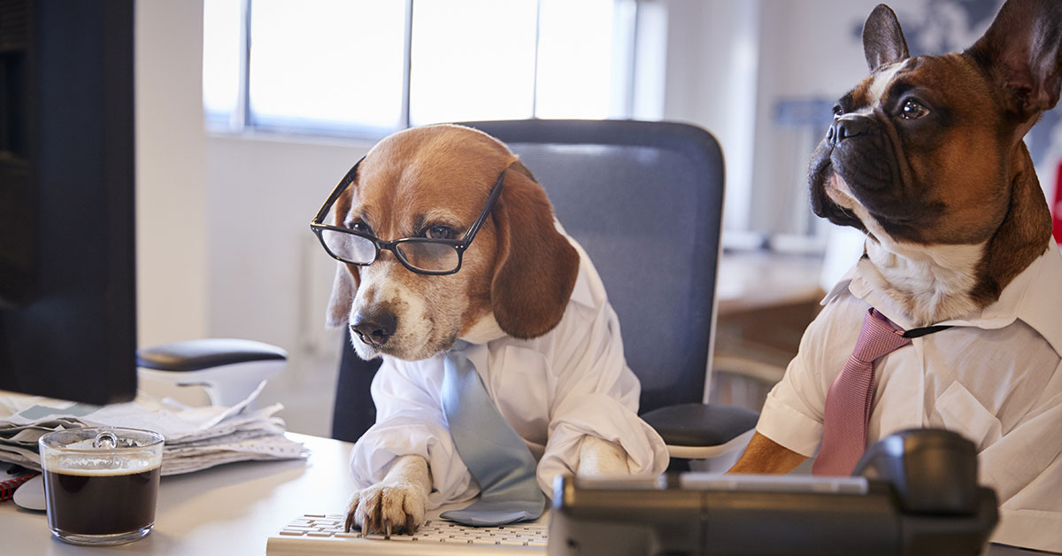 Pets, Politics & Pot in the Workplace